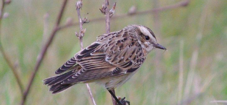 Vogelmonitoring leicht gemacht: Erfassung der Brutvögel wird digitalisiert