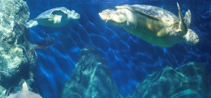 Schildkrötenpanzer putzen im SEA LIFE Konstanz – die Meeresbewohner bereiten sich auf den Frühling vor