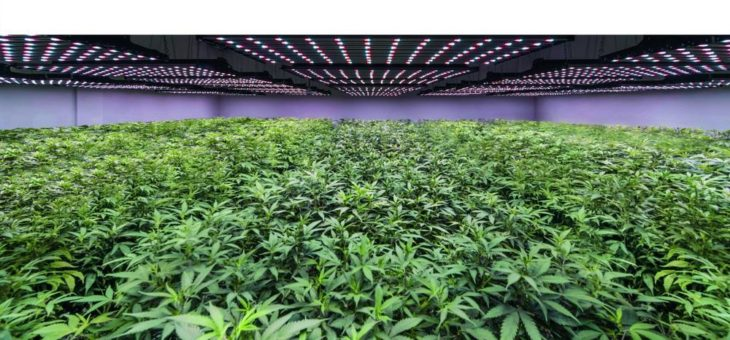Cannabis – Made in Germany