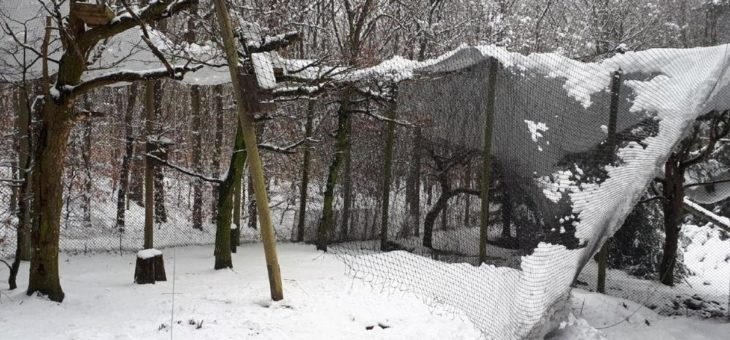 Spendenaufruf nach Schneechaos
