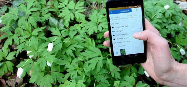 Sag mir, wo die Blumen sind: Pflanzenvorkommen in Deutschland per App erfassen