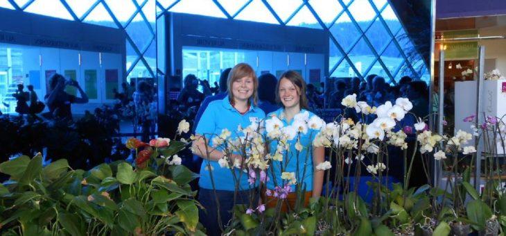 Orchideen kaufen und Gutes tun