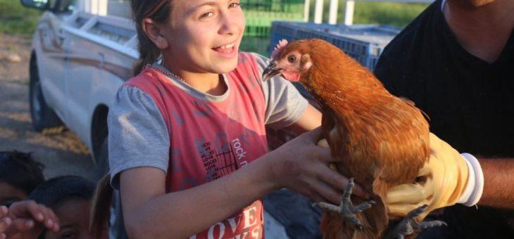 Geflügel verbessert Ernährung und sichert Einkommen für kurdische Flüchtlinge