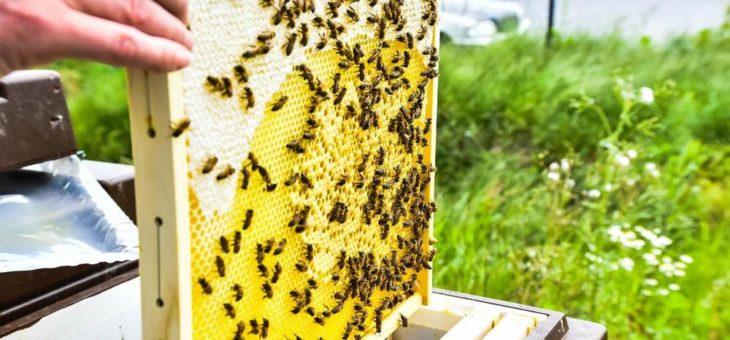 B+S und animonda engagieren sich für den Bienenschutz