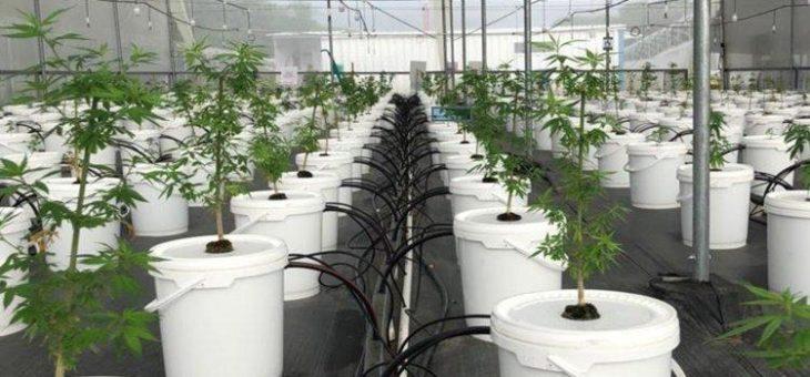 Khiron Life Sciences: Medizinisches Marihuana für Südamerika!
