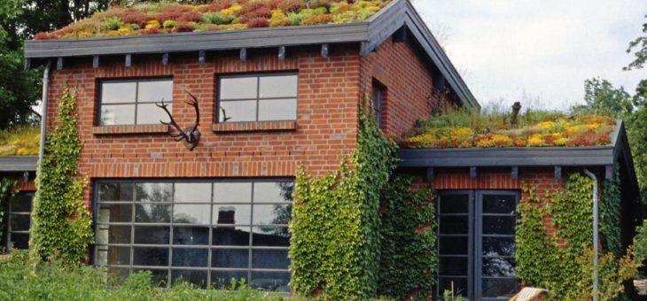 Dachbegrünungen bieten vielfältige Vorteile