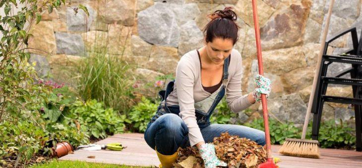 Der Garten im Herbst: Pflanzenpflege hat Hochsaison