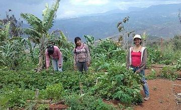 Mehr Bildung, mehr Hygiene, bessere Arbeitsbedingungen: GKS fördert kolumbianische Biobauern