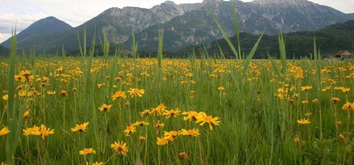 Besserer Schutz für gefährdete Wildpflanzen