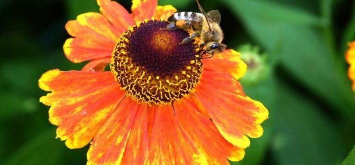 Kostenfreies Webinar zum Thema Insektengiftallergie