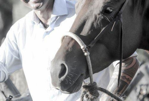 Erfahrener Horseman am Huf