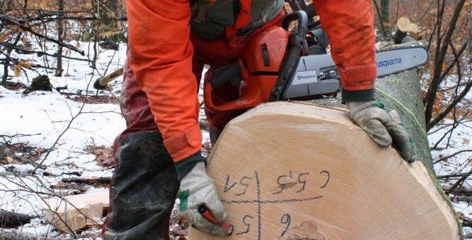 Laufende Einschlagssaison soll leergefegte Laubholz-Lager füllen
