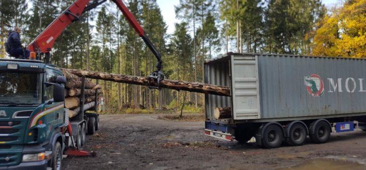 Von Hann.Münden über Hamburg bis Hanoi – Borkenkäfer-Bäume reisen auf Containerschiffen nach Übersee
