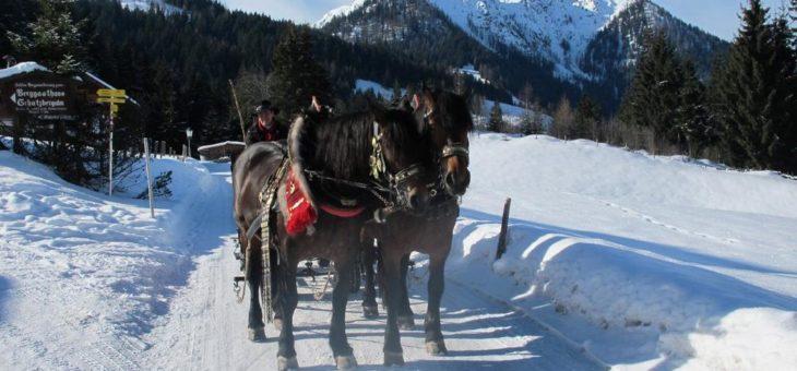 Romantik mit 2 PS: Im Pferdeschlitten durch die Wildschönau