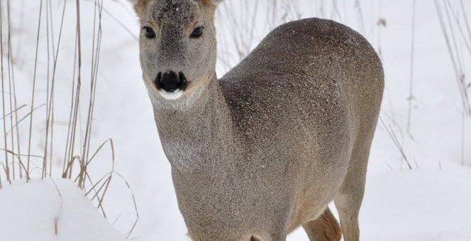 Bitte nicht stören! So können wir alle den Wildtieren helfen