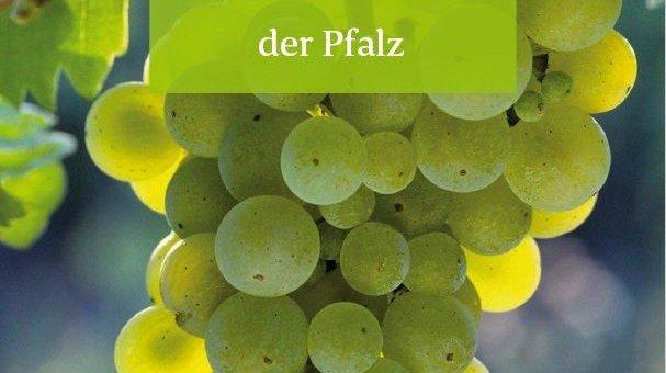 Neue Broschüre stellt 14 Rebsorten der Pfalz vor