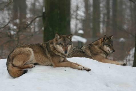 Führung zu Wildtieren im Winter am kommenden Sonntag, 3. Februar 2019