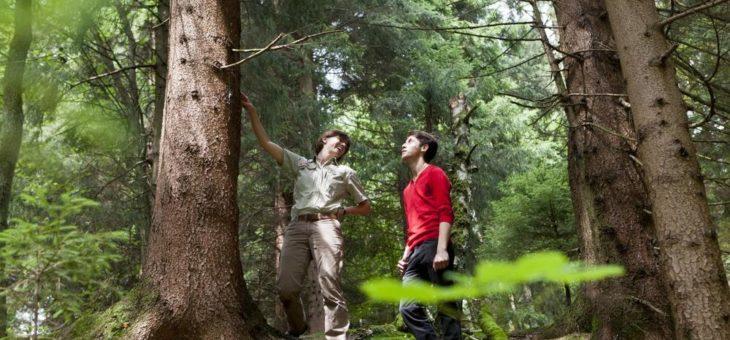 So vielfältig wie der Wald