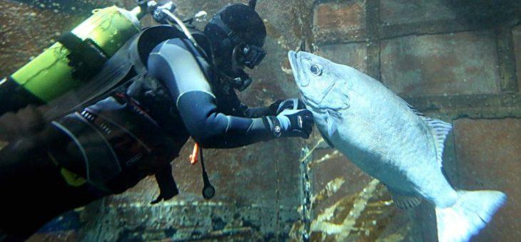 F(r)isch verliebt – wenn Fische flirten!
