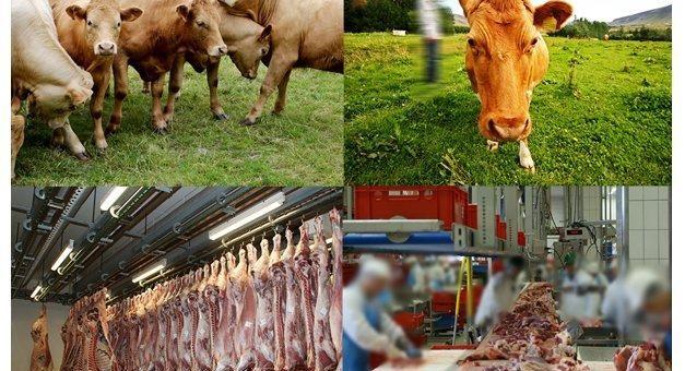 artec technologies AG: Lösung für datenschutzkonforme Videoüberwachung in der Fleischindustrie