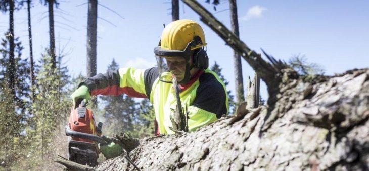 Sturmtief Eberhardt – Landesforsten warnen vor Betreten der Wälder