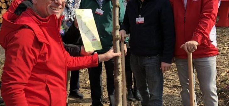 4.400 neue Bäume für den Bad Sodener Wald