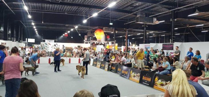 4. hundundkatze Niederrhein 2019 am 4. und 5. Mai in der Messe Kalkar