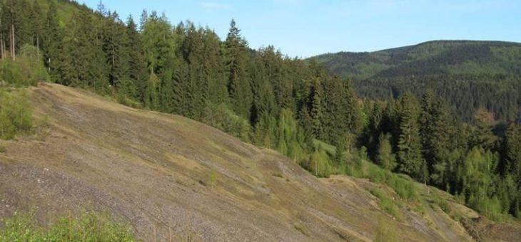"Seltene ""Spezialisten"" in Gefahr – geschützter Schwermetallrasen bei Lautenthal stark bedroht"
