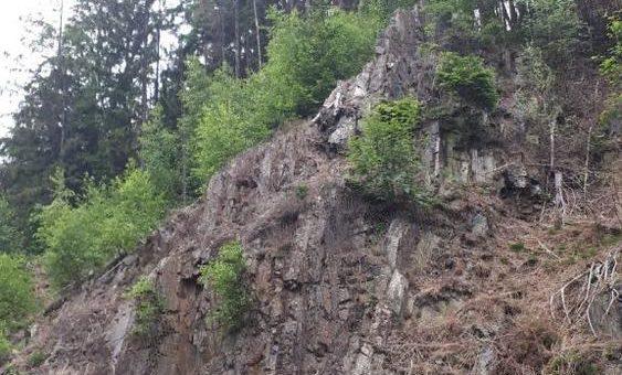 Borkenkäfer verursachen Baumfällarbeiten an den Steilhängen im Okertal
