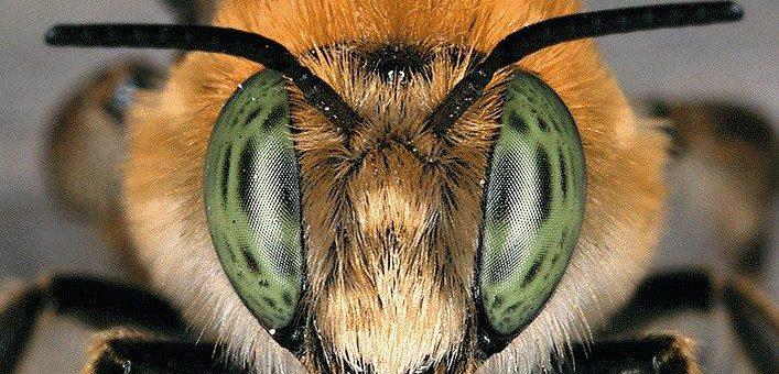 Rückgang der Insektenvielfalt: Fakten, Folgen und Handlungserfordernisse