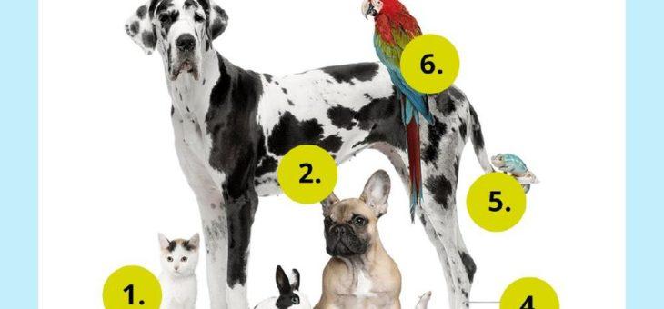 Tierfreunde: Fast jeder zweite Schweizer hält ein Haustier