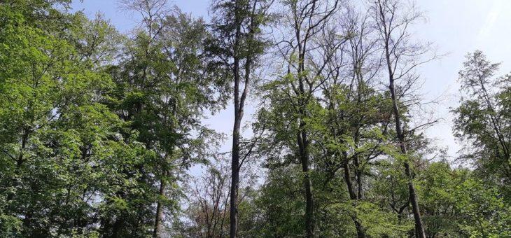 Niedersächsische Landesforsten warnen vor dem Betreten der Wälder