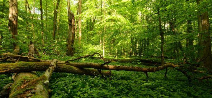 Naturschutzinitiative e.V. (NI) fordert naturnahe Wälder!