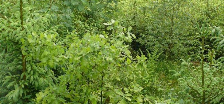 Jäger präsentieren Jagdkonzept für Waldumbau