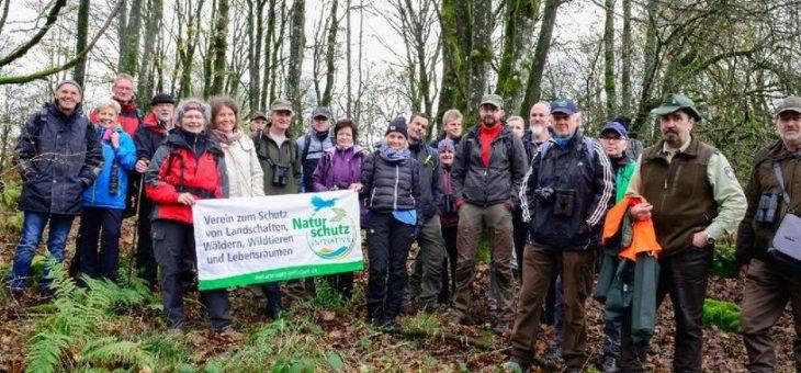 Naturschützer erleben mit dem Umweltverband Naturschutzinitiative e.V. (NI) die Waldwildnis im Nationalen Naturerbe Stegskopf