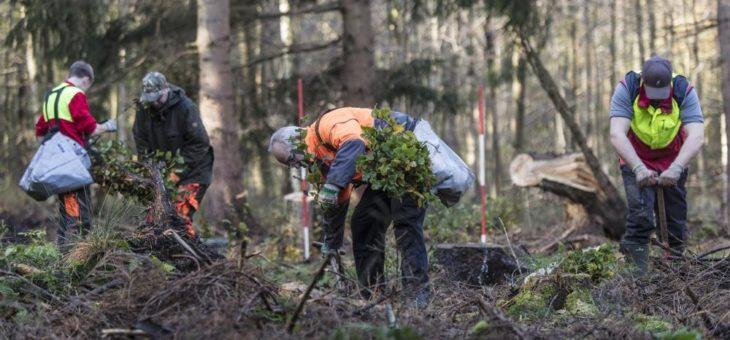 Der Wald fest im Griff des Klimawandels