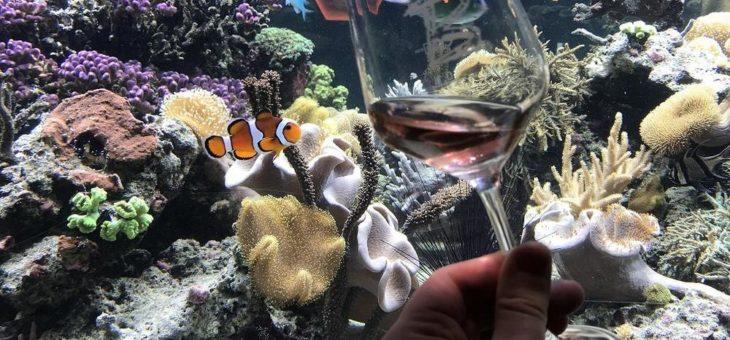 """""""Weinprobe unter Wasser"""" im SEA LIFE Speyer"""