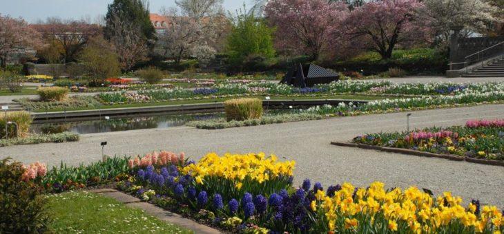Ostern im Botanischen Garten München: Frühlingsblüten im Freiland