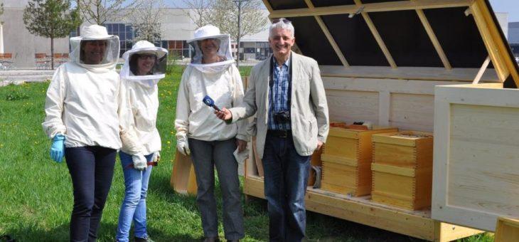 Jahr der Bienen in aller Ohren