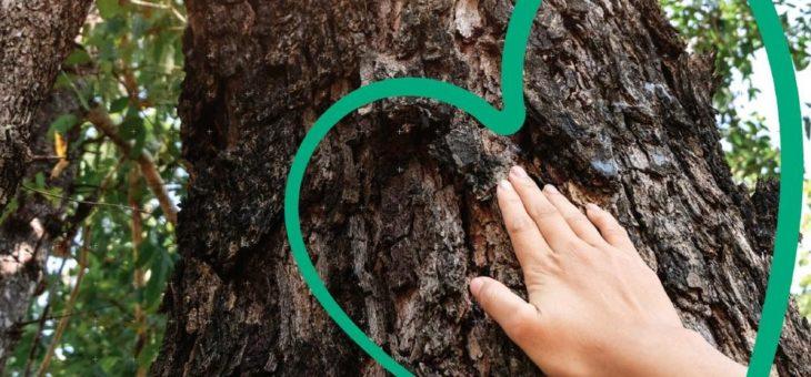 Erfolgreiche CO2-Kompensation – Kyocera zieht positive Bilanz