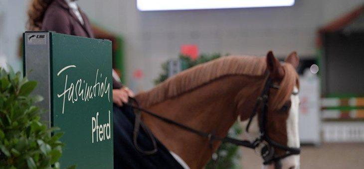 Die Vorbereitungen für die Faszination Pferd 2020 laufen