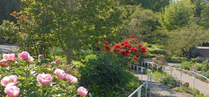 Botanischer Garten München-Nymphenburg  voraussichtlich bis 18. Mai 2020 geschlossen