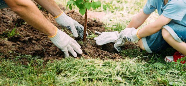 Baumfrieden: Nachhaltiger und langfristiger Trauerort