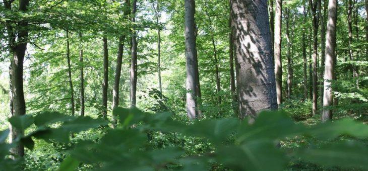 Wanderungen im Nationalpark  mit Familien, Waldmenschen, auf alten Pfaden und über Weide und Heide