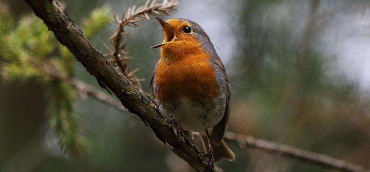 Angepackt: NABU-Tipps zur Artenvielfalt zuhause