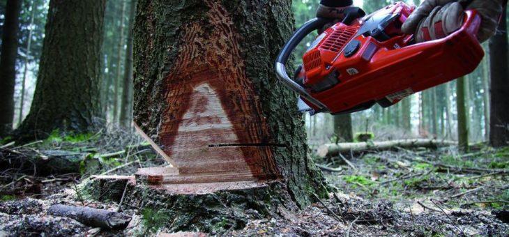 Mehr Unfalltote bei der Waldarbeit