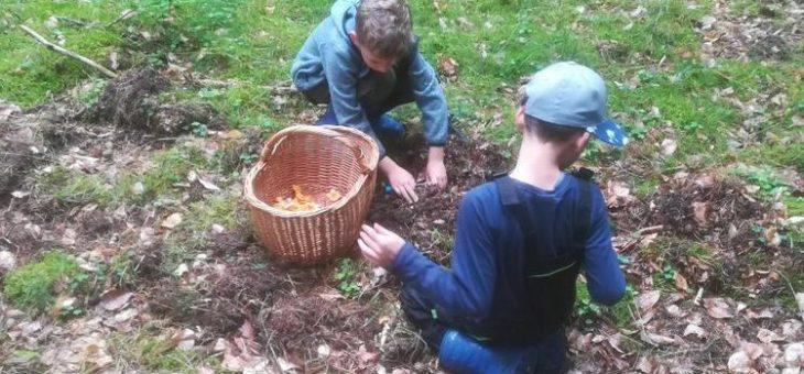 Pilze und Beeren: Sammelfreude und Saisonregeln im Müritz-Nationalpark