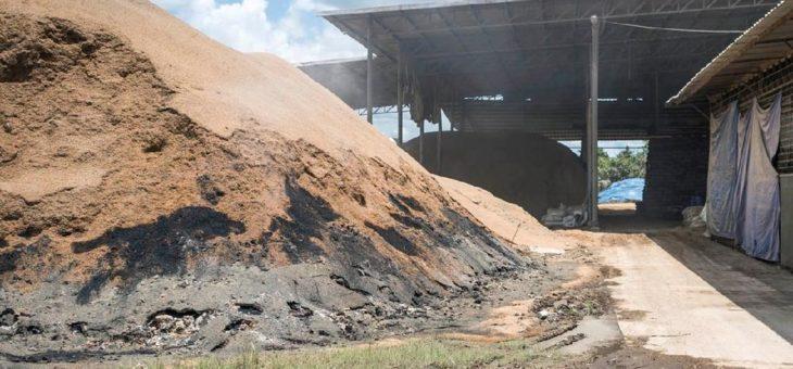 Reisproduktion: Biomasse als Energielieferant