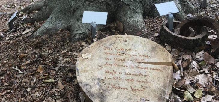 Warnung vor Gedenkstücken im Bestattungswald