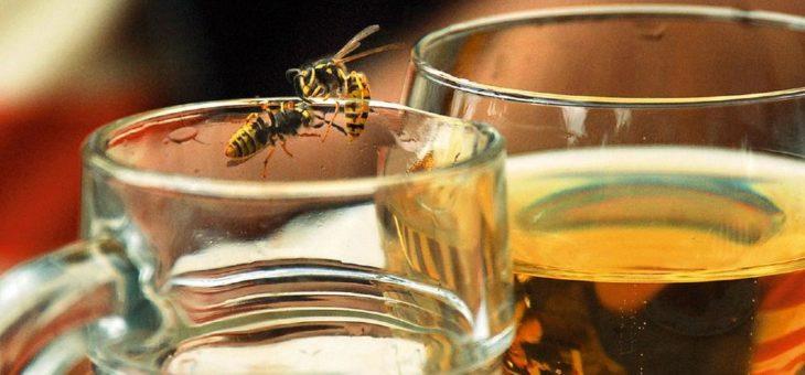 Wespen- und Bienenstiche: Tipps für erste Sofortmaßnahmen